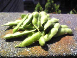 記事 枝豆収穫!のアイキャッチ画像